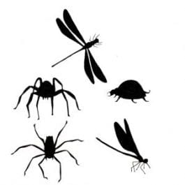 Lavinia Clear Polymer Stamp Bugs