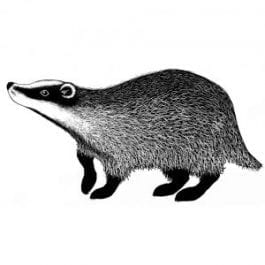 Lavinia Clear Polymer Stamp Badger 2
