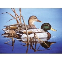 Royal & Langnickel Adult Large Painting By Numbers – Water Mallards