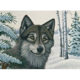 Royal & Langnickel Junior Large Painting By Numbers – Snow Wolf