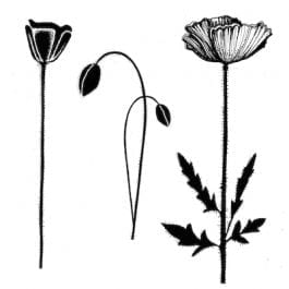 Lavinia Clear Polymer Stamp Group Poppies